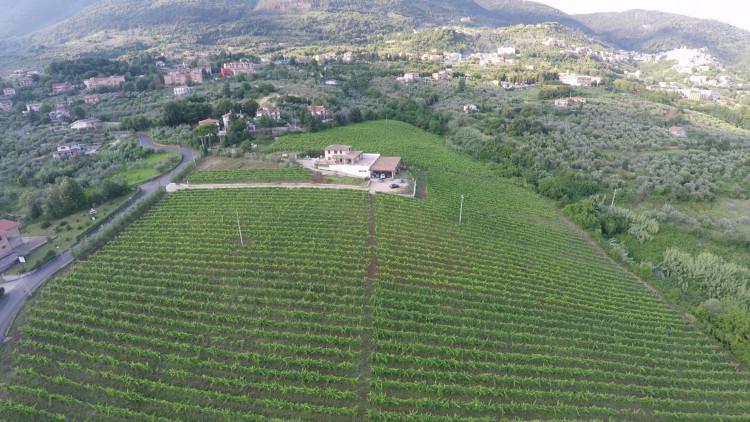 Azienda Vitivinicola Petrucca e Vela